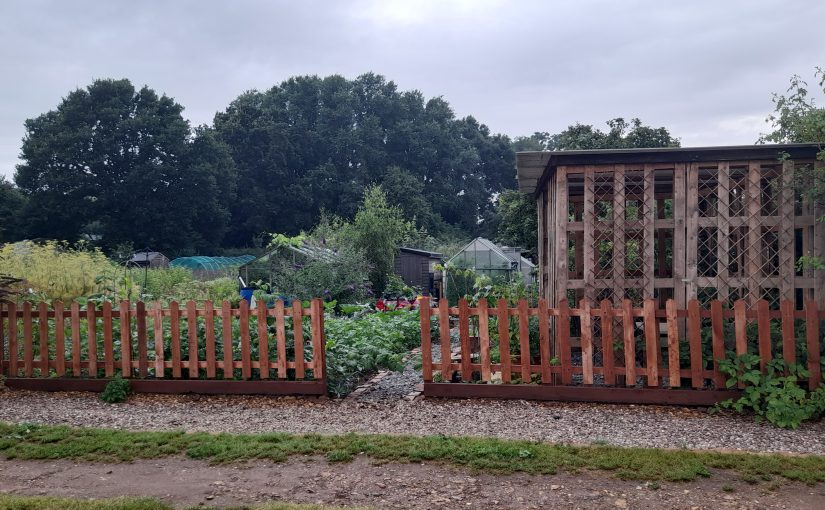 A year or so at our Community Allotment